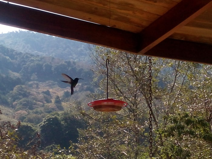 A hummingbird at El Toucanet joins guests for breakfast.