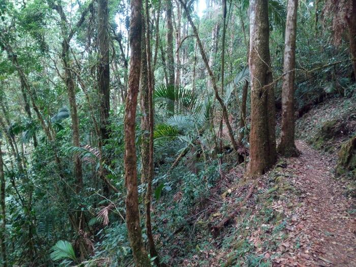 La Quebrada Trail at Savegre Natural Reserve.