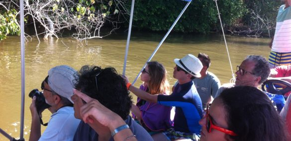 On a boat from Sierpe to Isla del Caño, guests are delighted to spot a large troop of rare squirrel monkeys.
