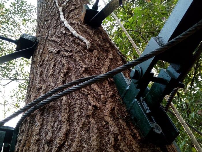 Tree anchor.