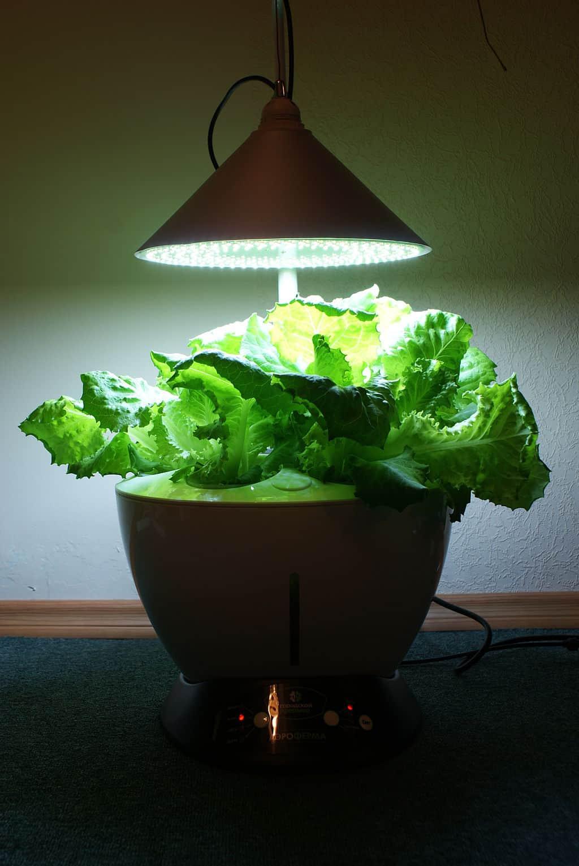 hydroponic gardening | lettuce