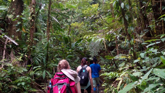 Into the green: Henry leads Mia and Cindy into the rain forest alongside Quebrada Piedras Blancas.