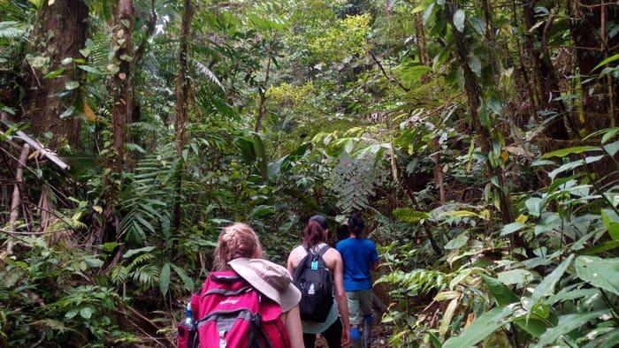 Into the green: Henry leads Mia and Cindy into the rain forest alongside Quebrada Piedras Blancas.