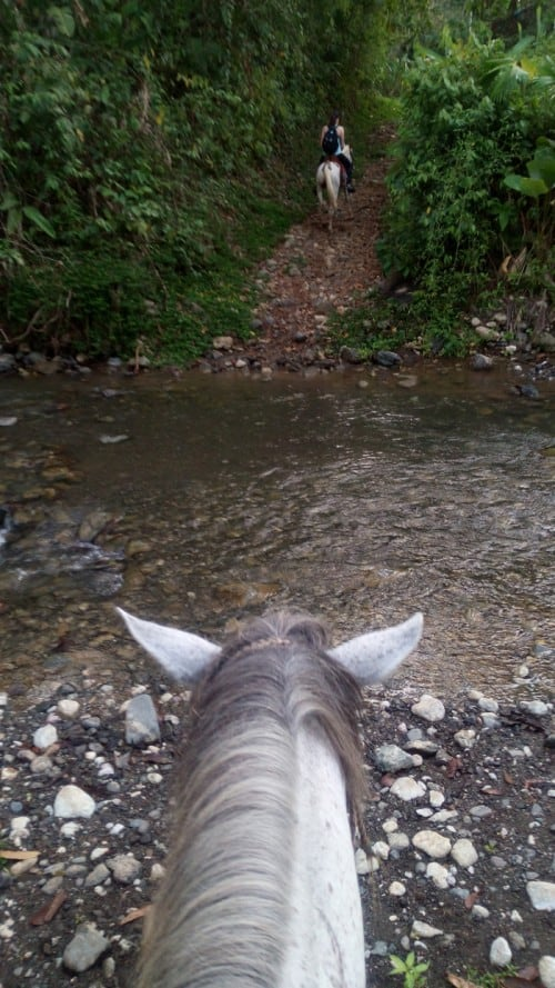 Sir Trots-a-Lot prepares to cross a stream.