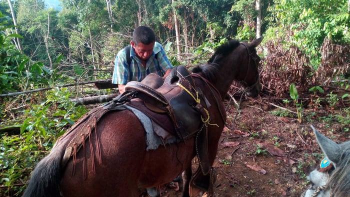 Don Gerardo makes some adjustments on his mount.