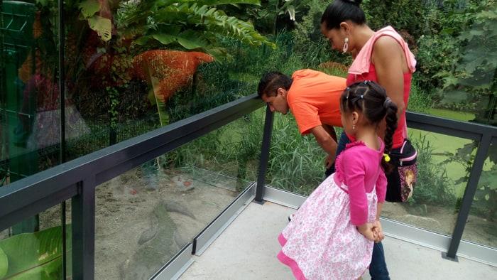 Jimmy Vega Jiménez and his family check out the crocodiles.