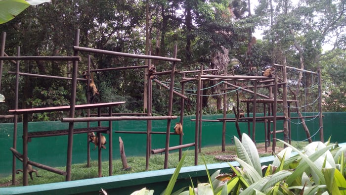 """Spider monkeys have a sort of """"jungle gym"""" in their enclosure, but no trees."""