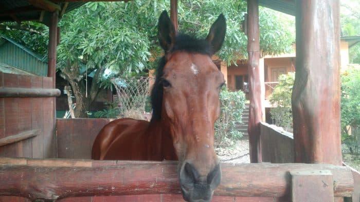 Nosara horse