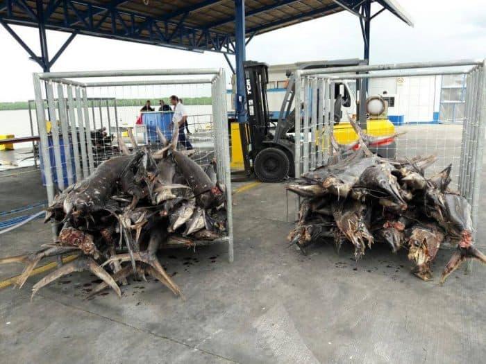 Costa Rica sail fish capture