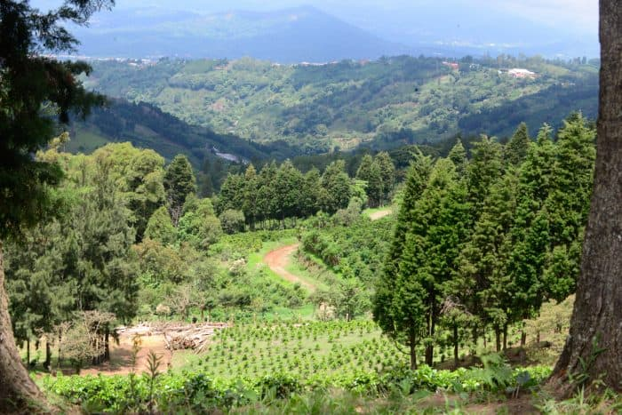 coffee farm naranjo
