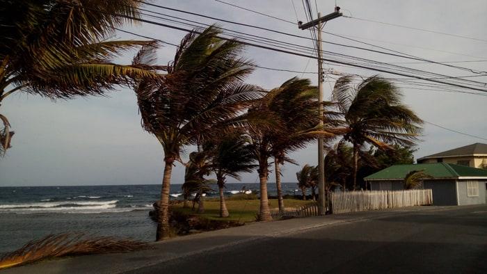 Wind-blown palms along the Roatán coast.
