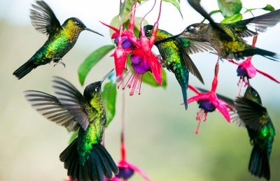 Bird-watching experts believe Costa Rica has the appropriate conditions to keep growing as one of the world's top destinations for this type of tourism.