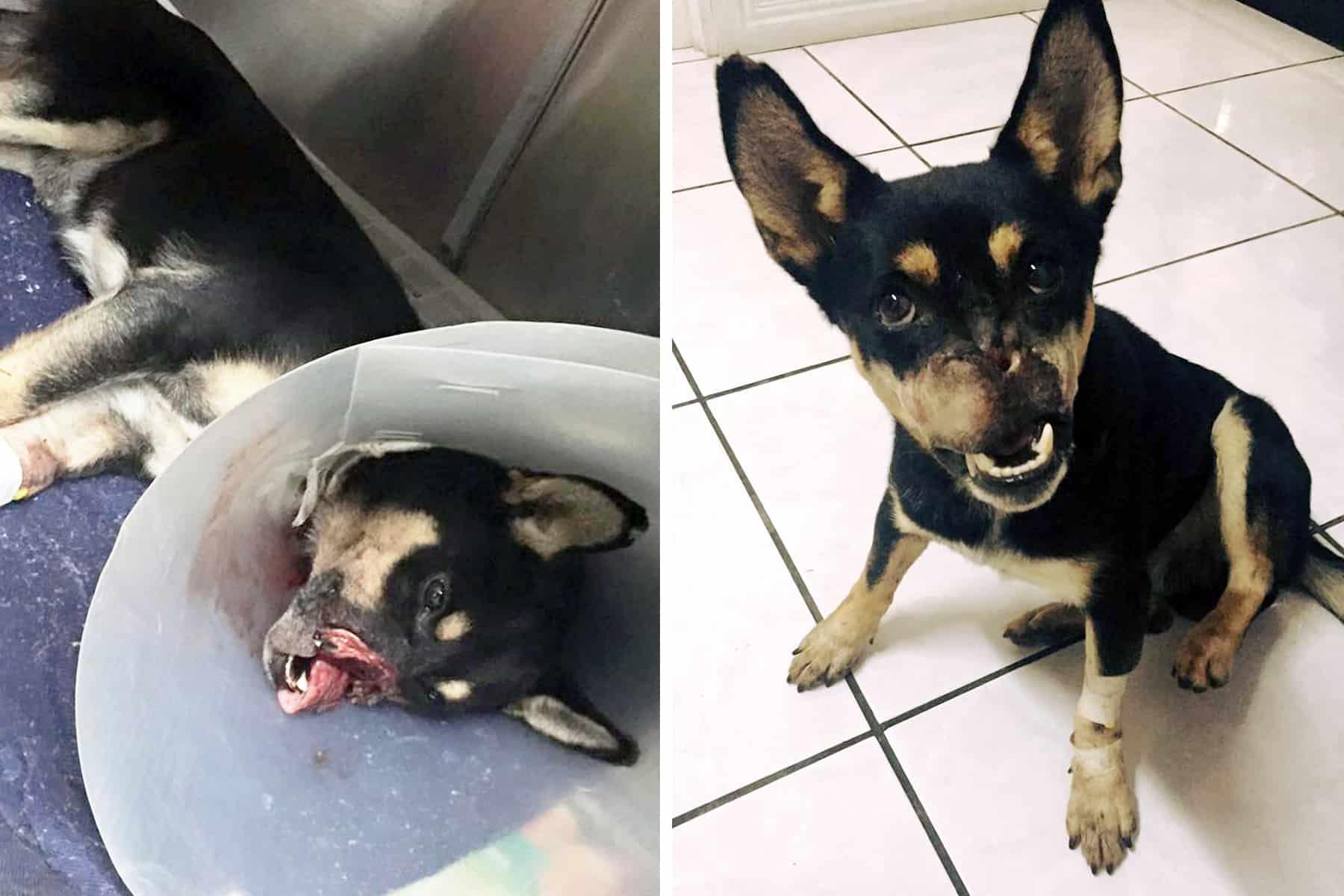Duke the dog, animal abuse