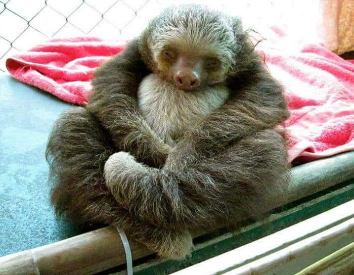 sloth sanctuary costa rica