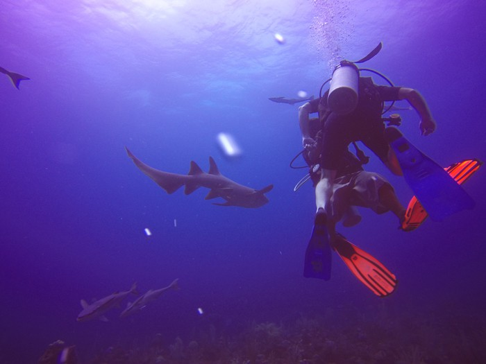 The author and his divemaster get up-close and personal with a bunch of nurse sharks at a dive site in Belize called the Tackle Box.
