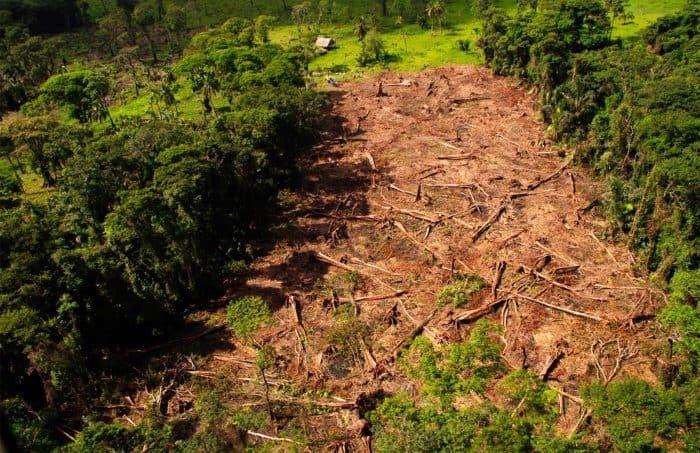Logging in Costa Rican border territory.