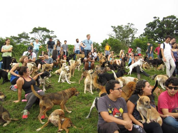 Just hanging out with a hundred dogs.