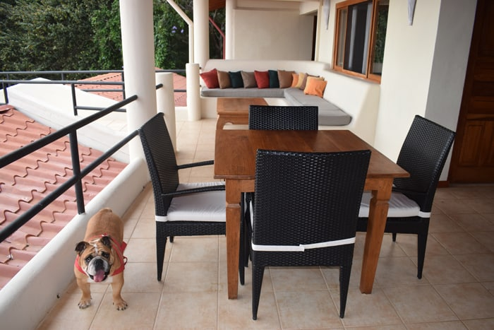 A deck at Tierra Magnifica, with one of three resident bulldogs.
