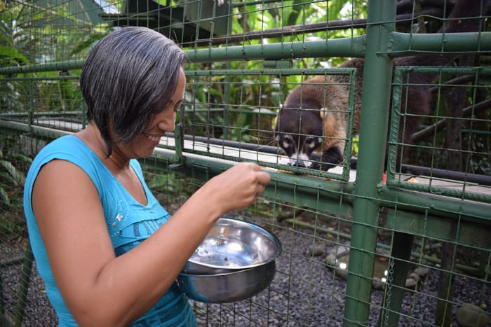 Guiselle Vidal feeds fruit to a hungry coati.