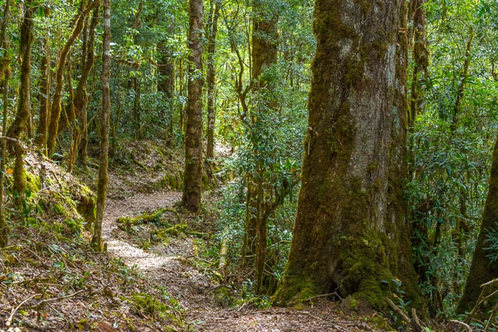 Cloud forest at San Gerardo de Dota, 2,400 meters above sea level, home of the elusive resplendent quetzal.