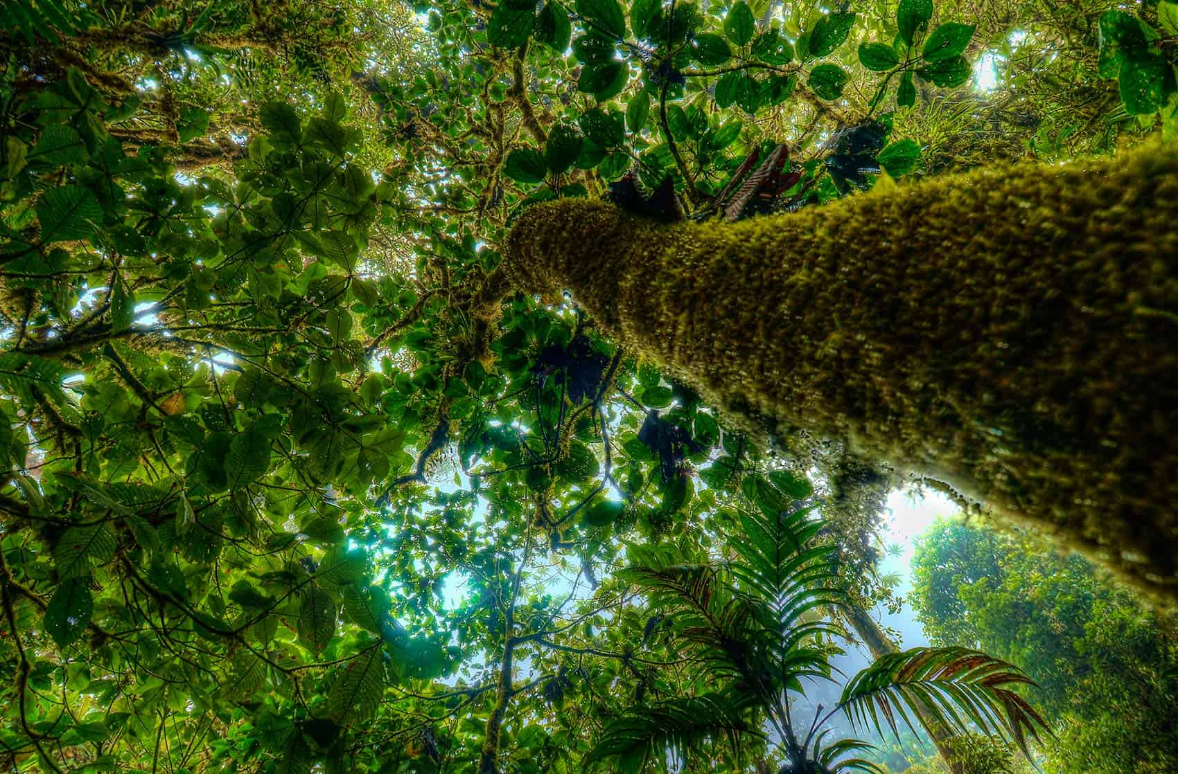 A green heaven up above in Monteverde.