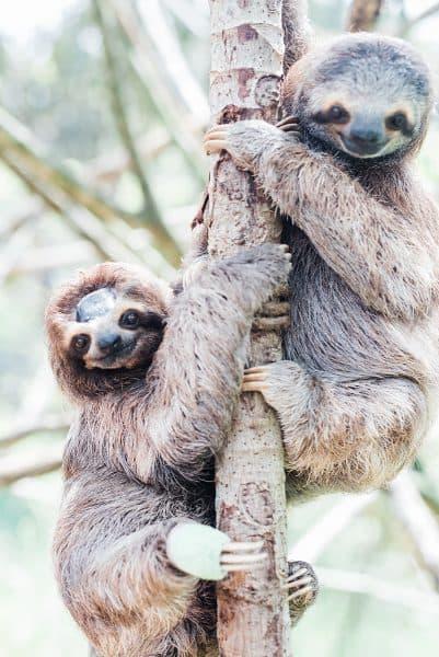 Kids Saving the Rainforest