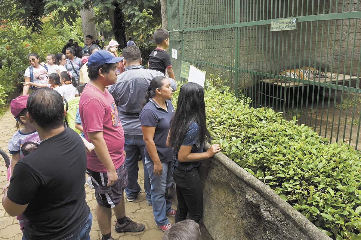 Nicaraguans Visit Zoo En Masse After Call For Help The Tico Times