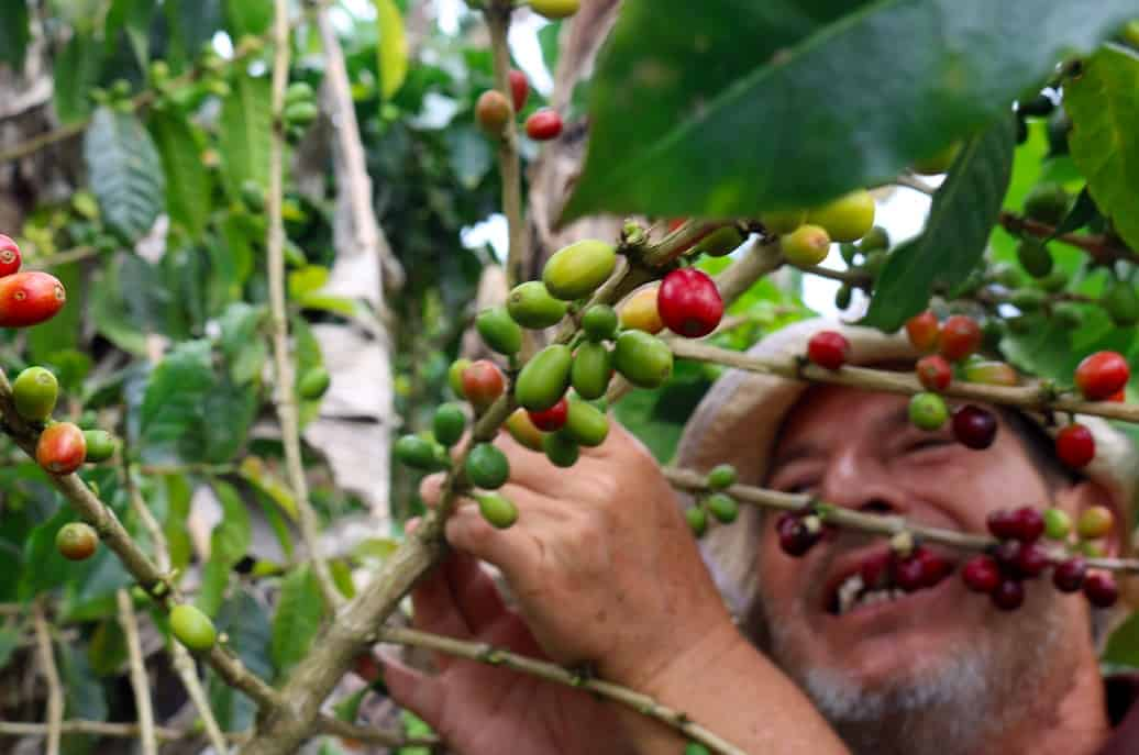 Costa Rica Coffee Tour