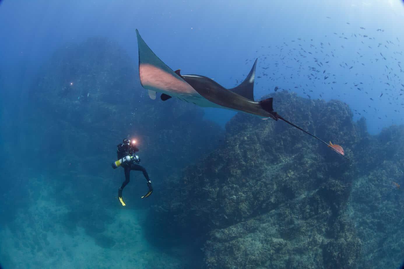 Costa Rica underwater life