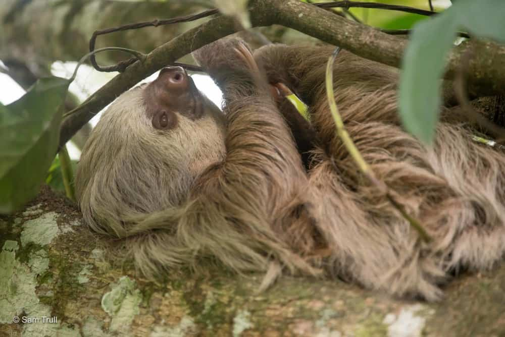 Saving Sloths Together