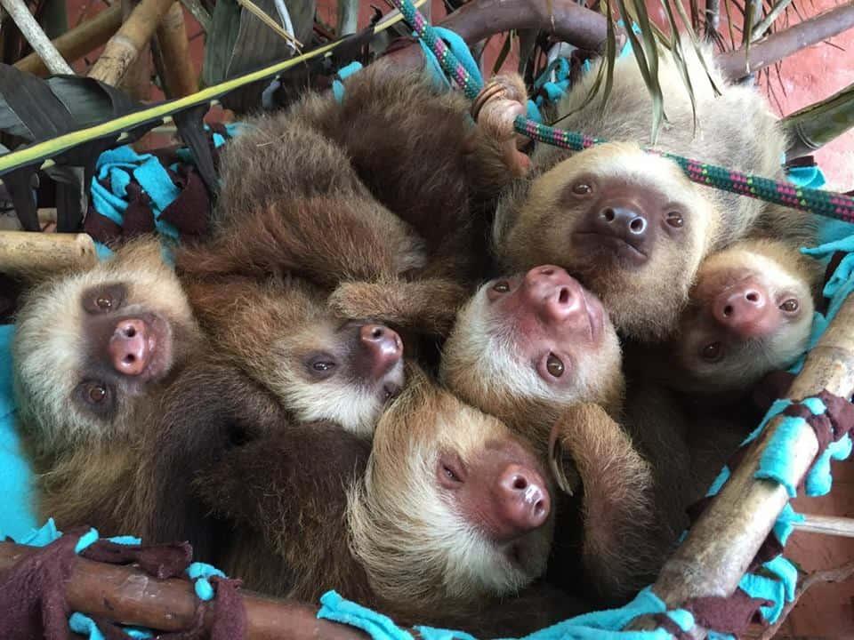 Sloth elementary