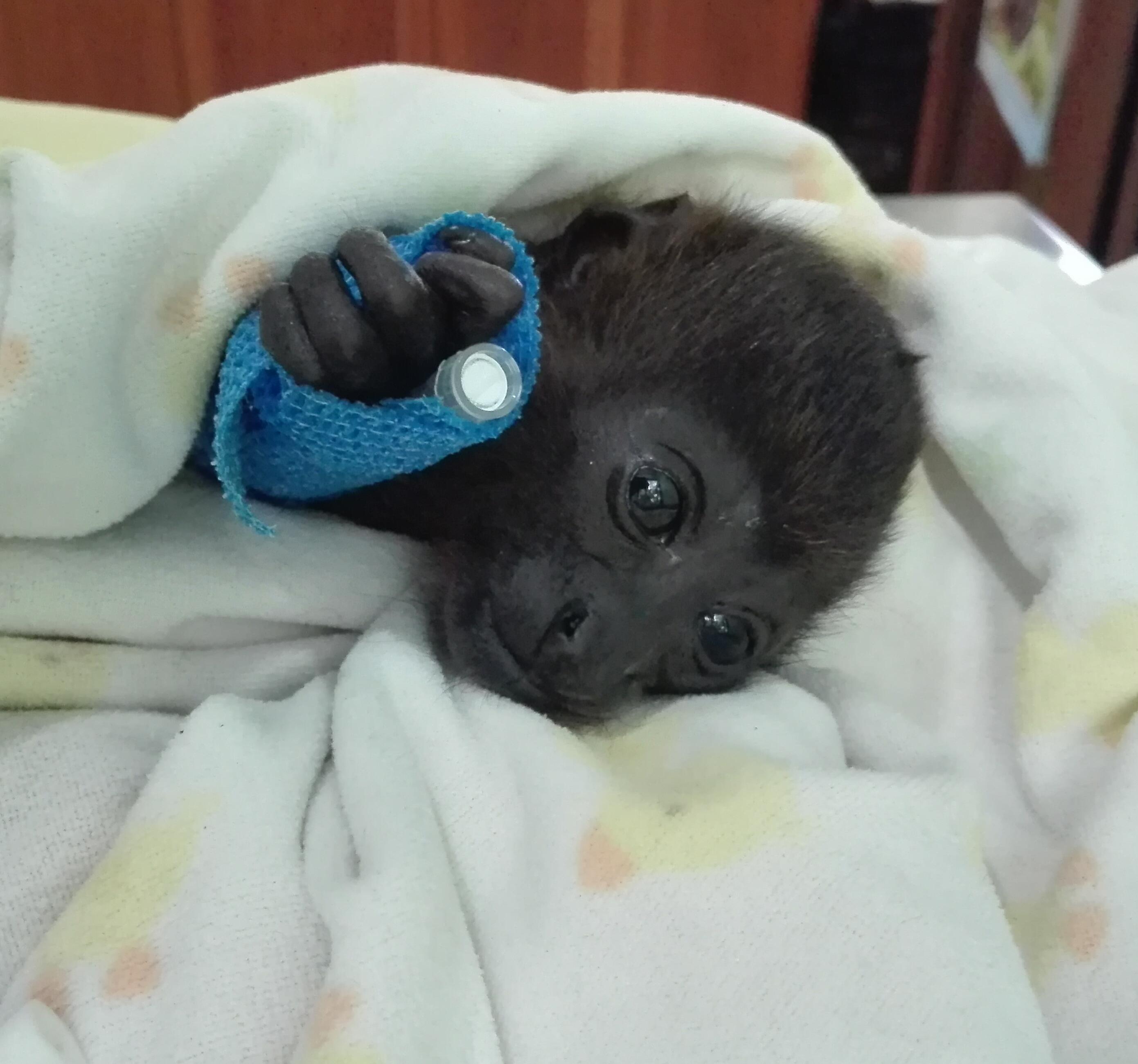Cleo the monkey