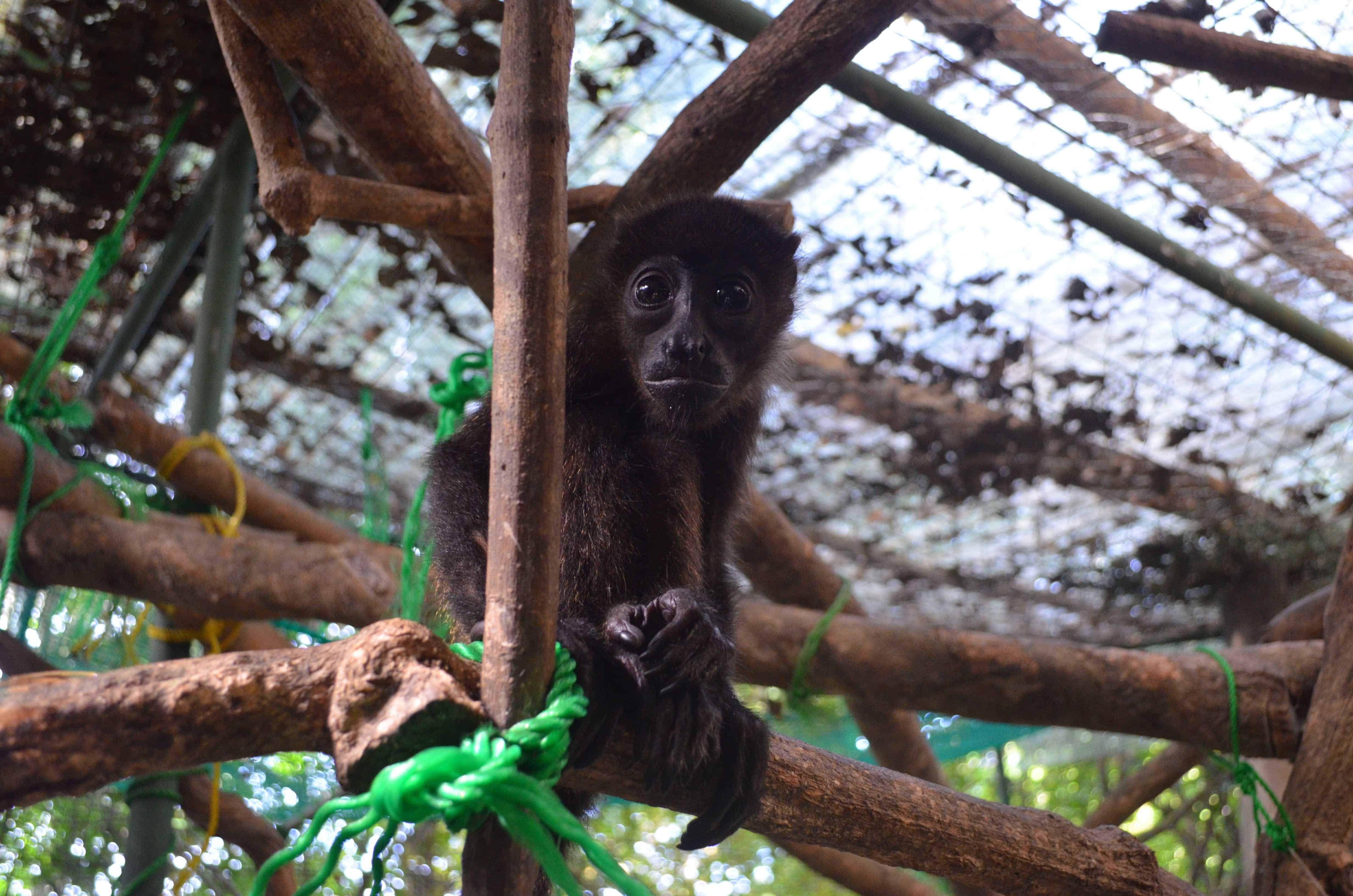 Kintu at Sibu