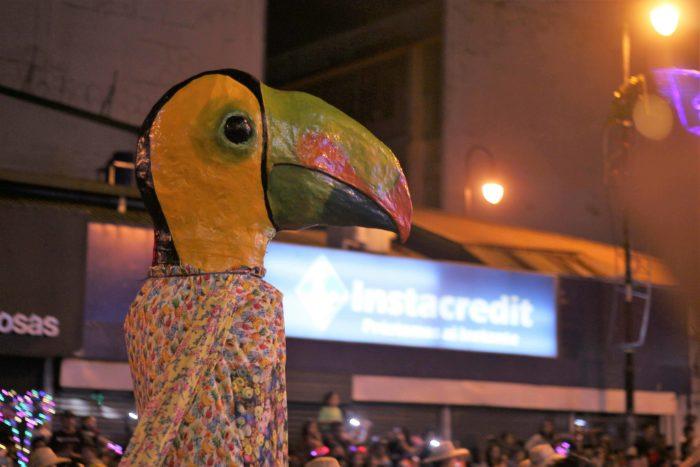 A toucan costume in the Festival de la Luz parade