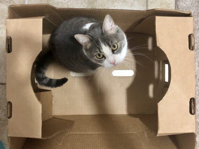 Cat self-quarantine