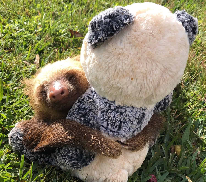 Sloth potty break
