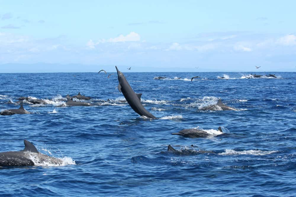 Dolphins swimming freely