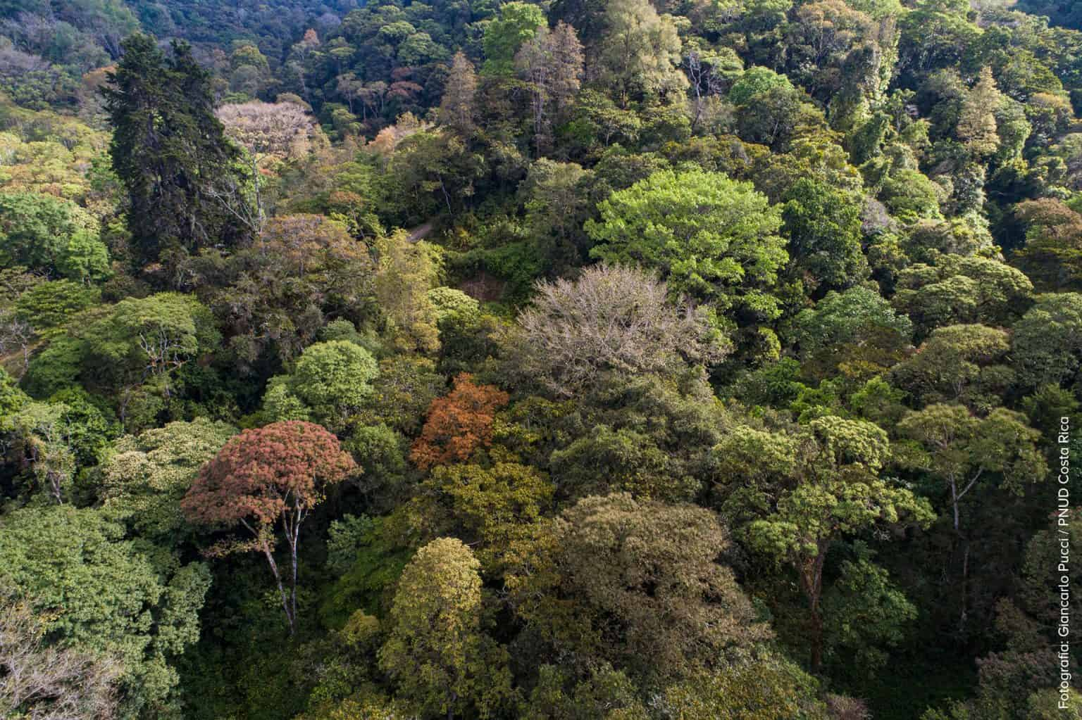 A forest in Costa Rica. Photo for illustrative purposes.