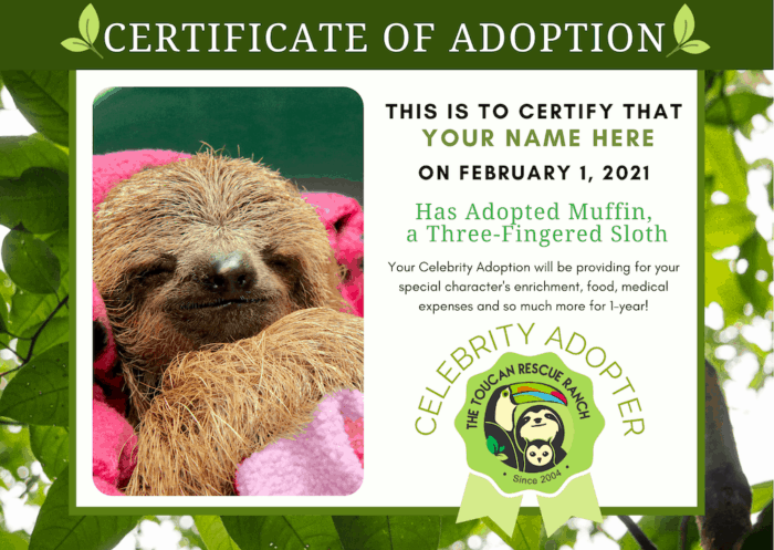 A sample certificate of sloth adoption.