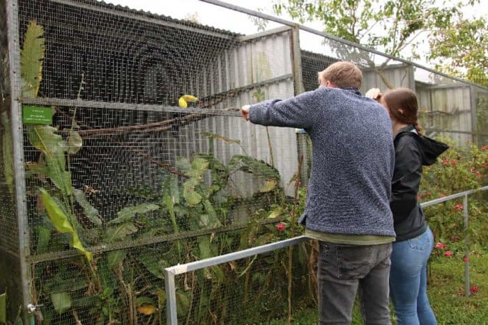 You'll be surprised to know that Toucan Rescue Ranch has rescued toucans.