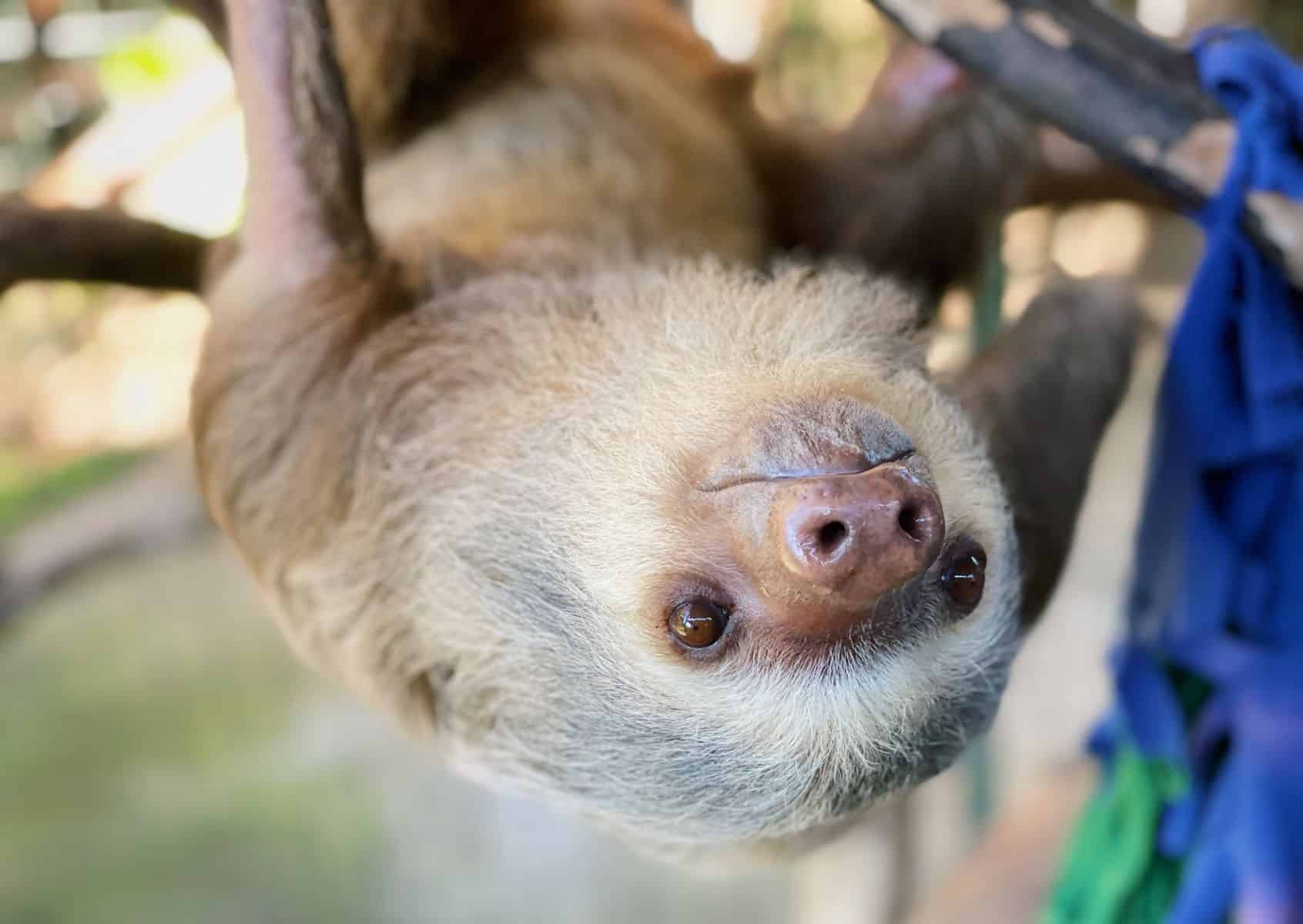 Admire Costa Rica's wildlife from a responsible distance -- that's the #StopAnimalSelfies goal.
