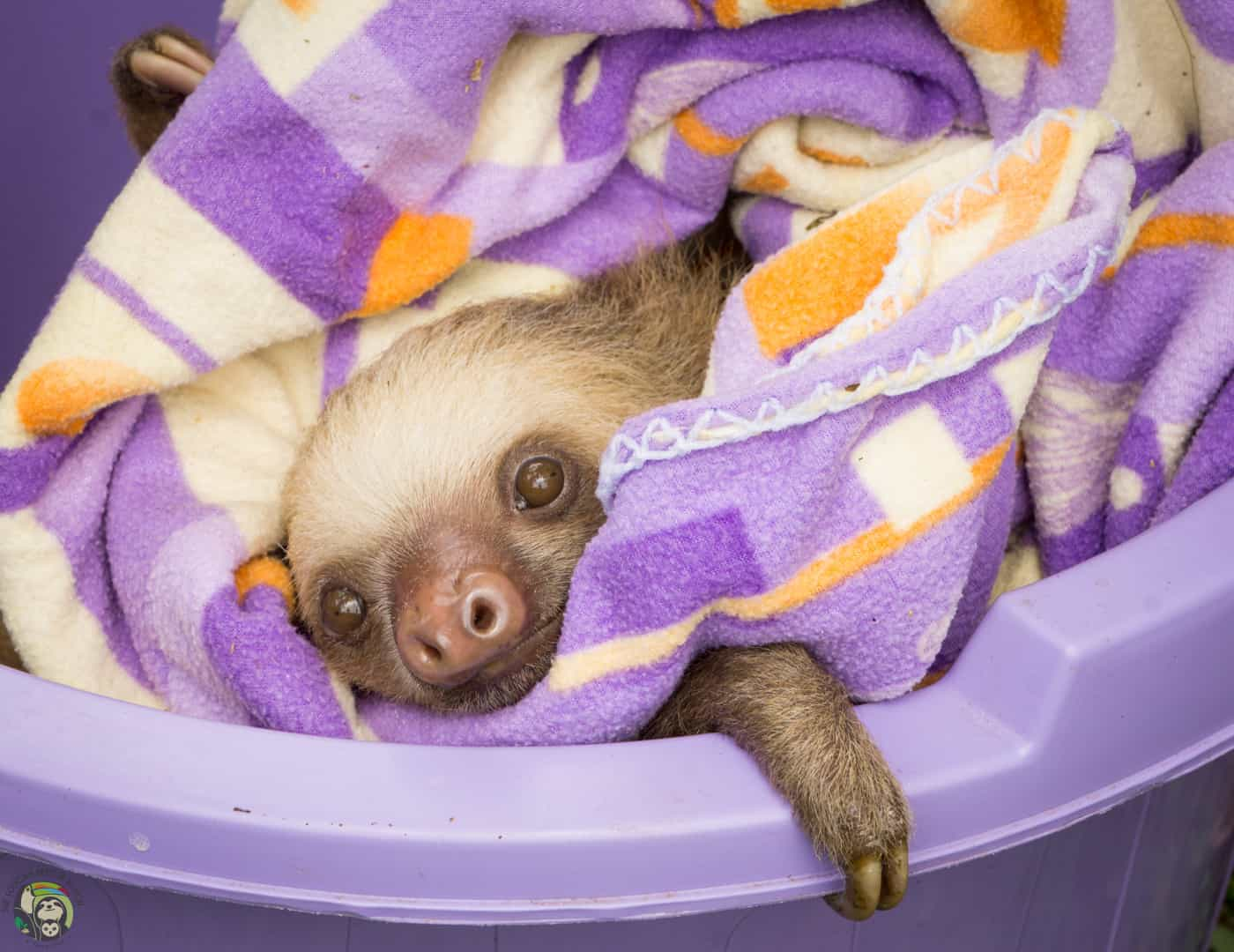 A sloth at The Toucan Ranch in Costa Rica.